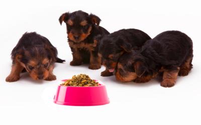 Les bases de l'alimentation des animaux domestiques