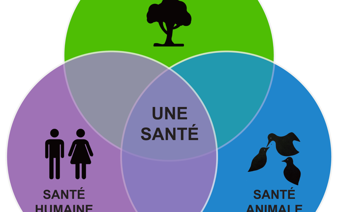 One Health : Homme, animal, environnement