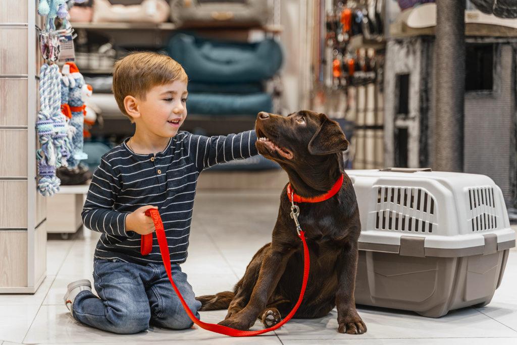 Enfant tenant en laisse un labrador