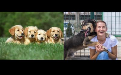 Adopter dans un élevage ou dans un refuge?