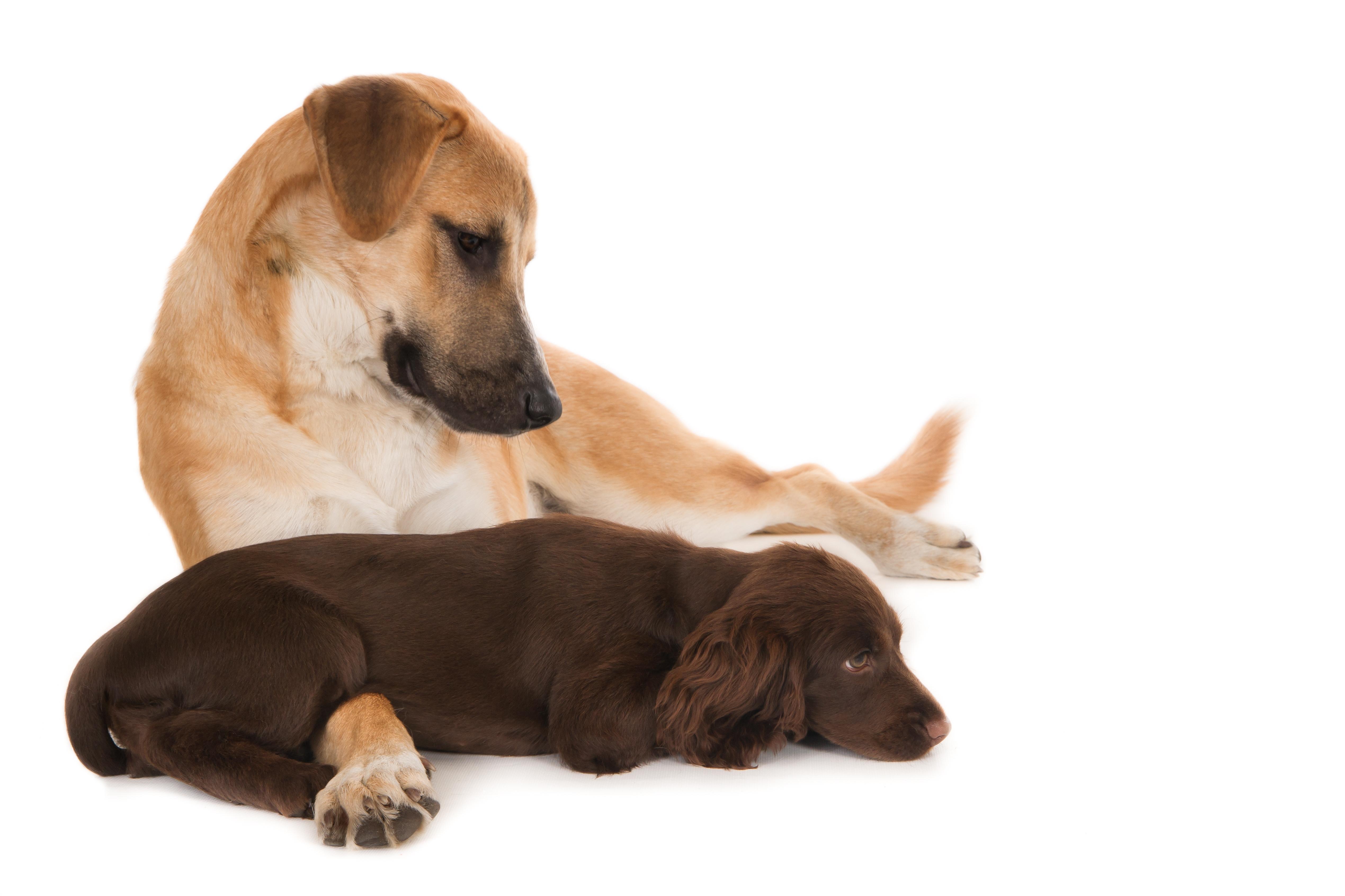 chien et chiot