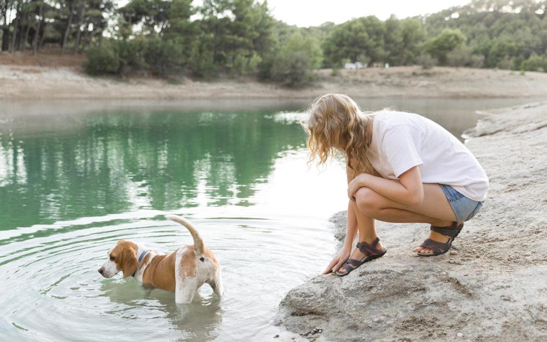 Cyanobactérie, attention danger ! chien qui se baigne